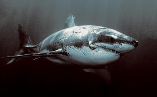 shark_scars
