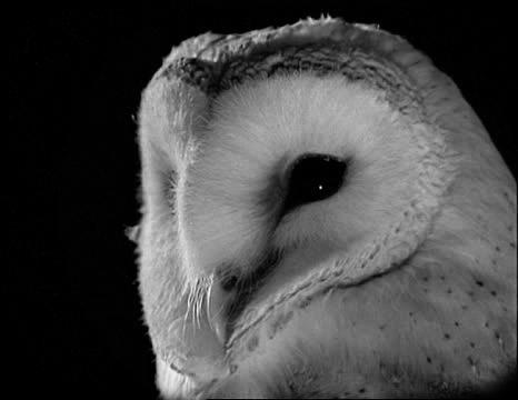 Ari-Owl.
