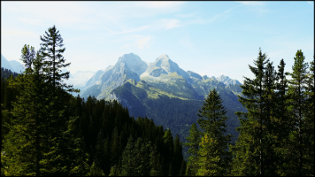 Feature-Alpin-Walder-I